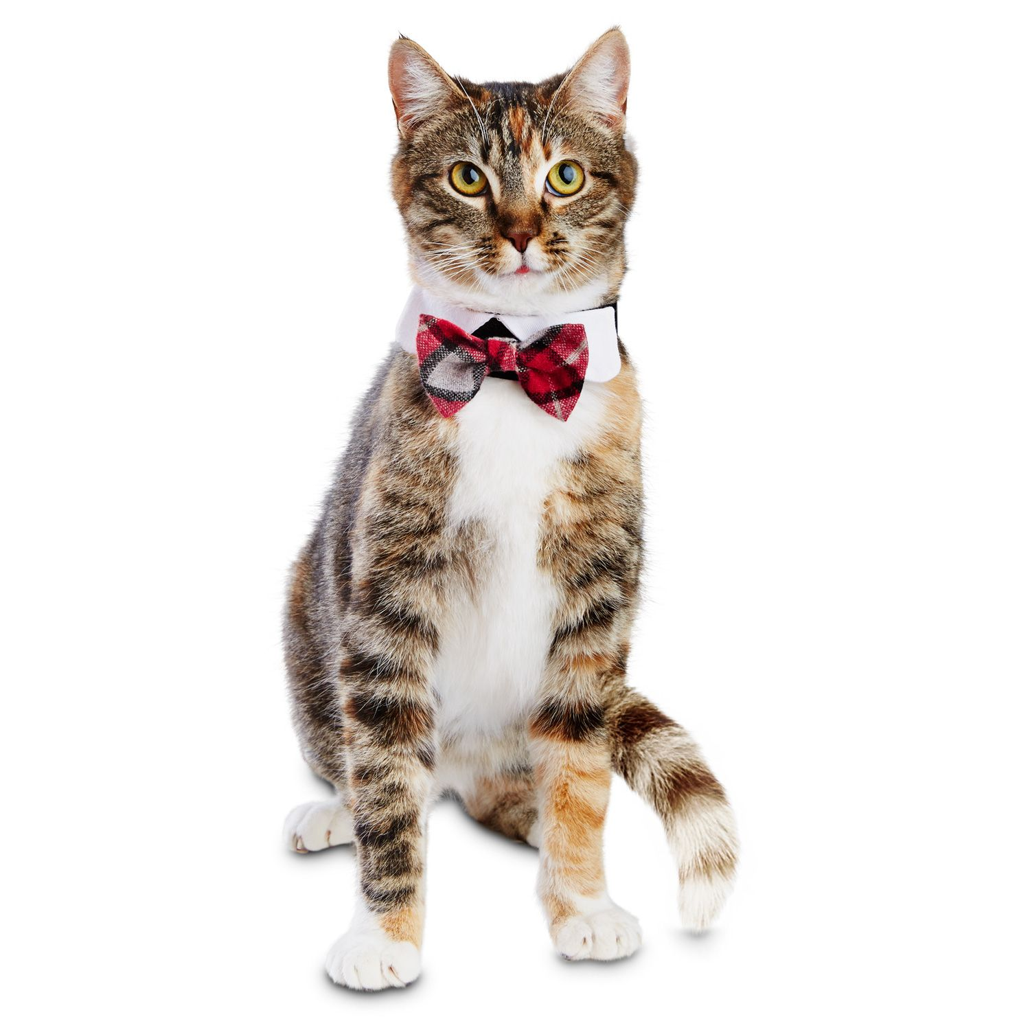 Petco Holiday Red Plaid Bowtie Cat Costume  sc 1 st  Pinterest & Petco Holiday Red Plaid Bowtie Cat Costume | Xmas Kitty | Pinterest ...