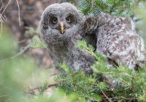 #wildlife #photography #birds #owl