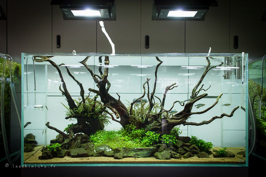 Takashi Amano Tree   Google Search | Aquascaping | Pinterest | Aquariums,  Aquarium Ideas And Fish Tanks
