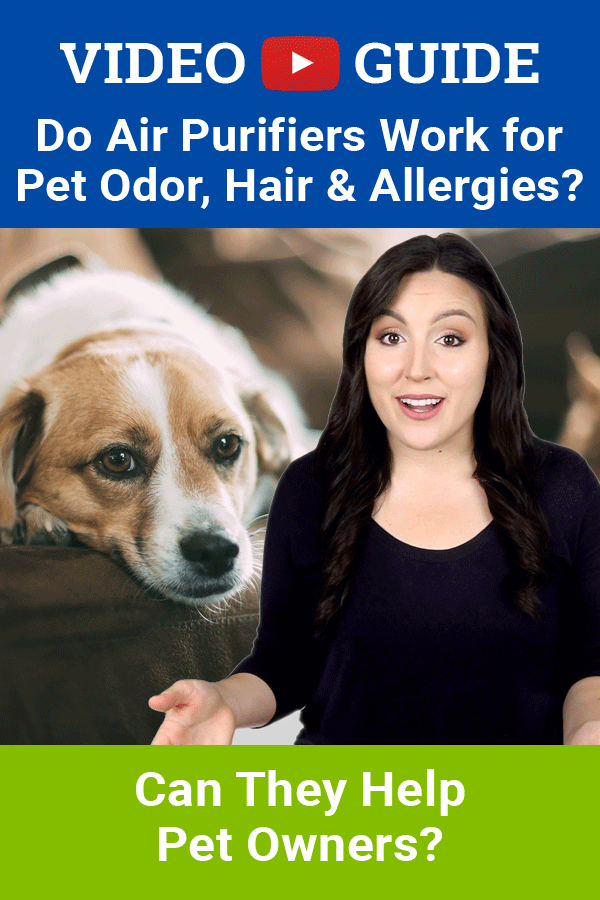 Do Air Purifiers Work for Pet Odor, Hair & Allergies? (Can
