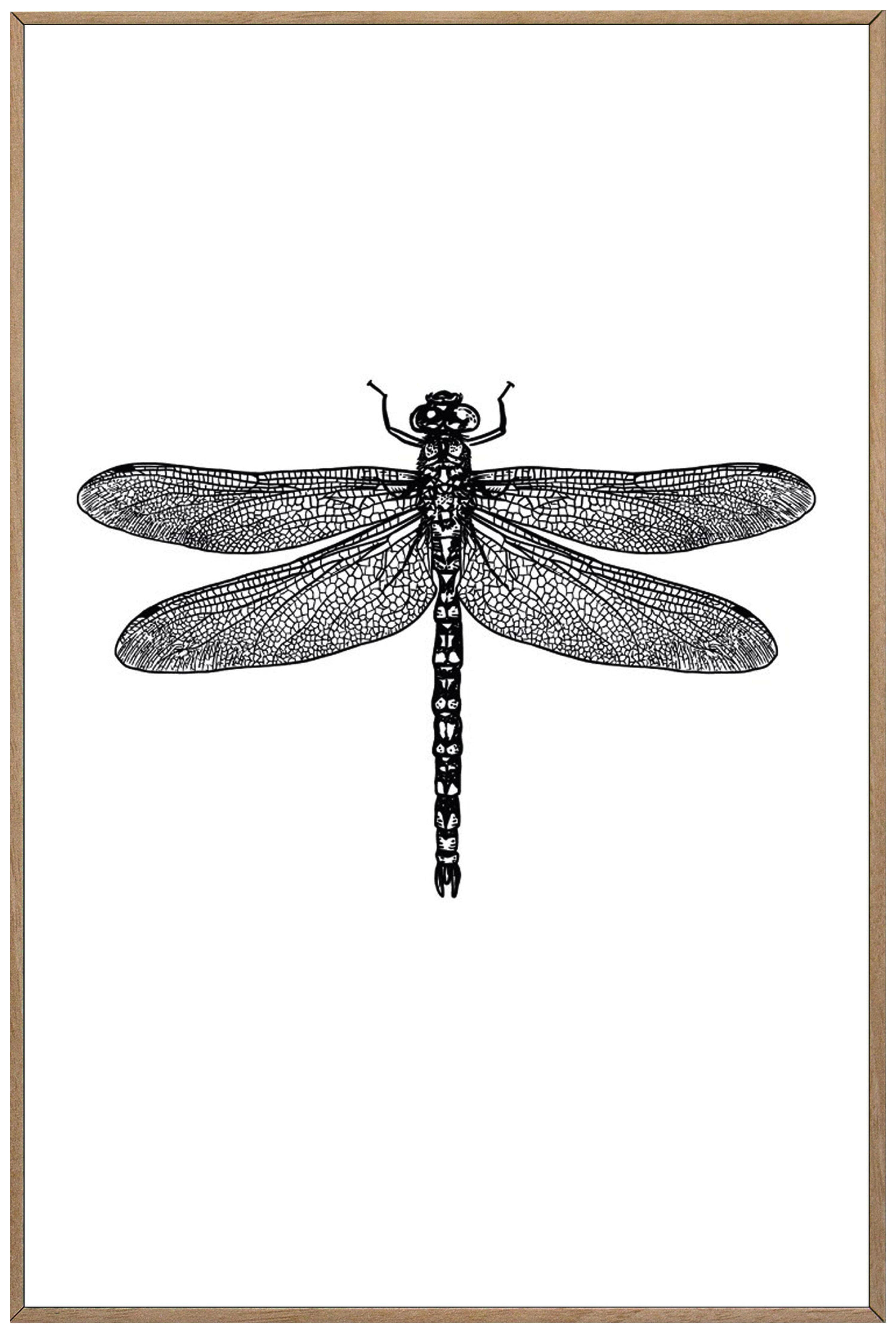Bild Von Libelle In Schwarz Weiß Bilder Bilder Online Kaufen Libellen Zeichnung
