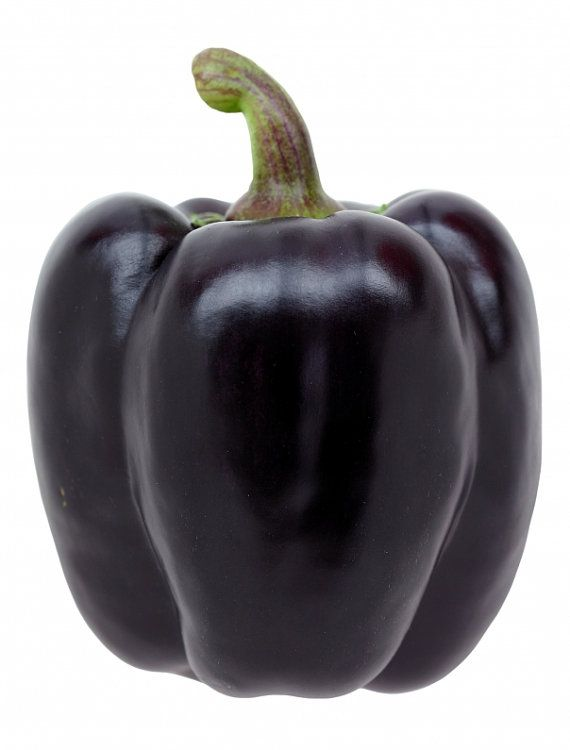 """""""Purple Beauty"""" is a wonderful variety of purple pepper, producing thick fleshed fruits that will add color to any meal. What's better than a pepper that's both beautiful AND delicious?"""