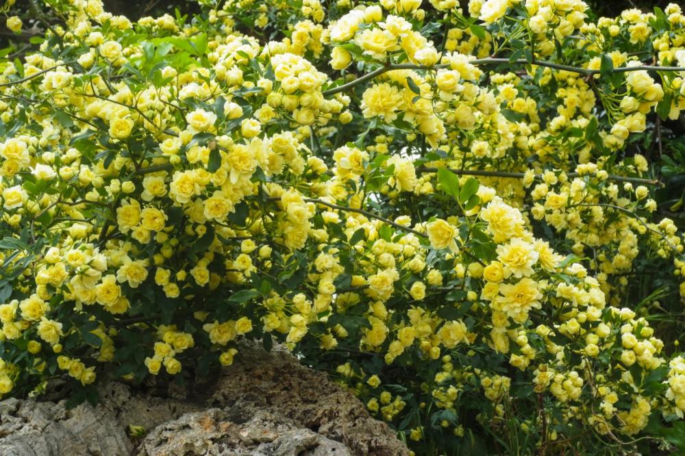 Choisir Les Plantes Qui Poussent Vite Pour Cacher Un Vis A Vis En