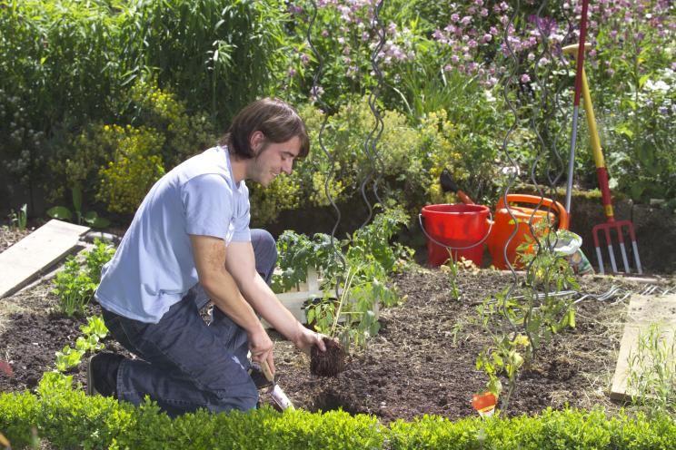 10 Tipps Fur Den Anbau Von Tomaten Tomaten Pflanzen Tomaten Garten Pflanzen
