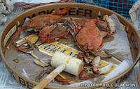 Mike S Crab House Annapolis Crabs Seafood Restaurant Not The
