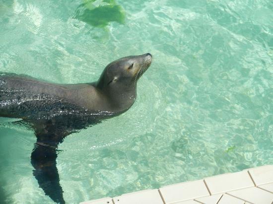 Sea Lion Encounter At Blue Lagoon Disney Cruise Bahamas