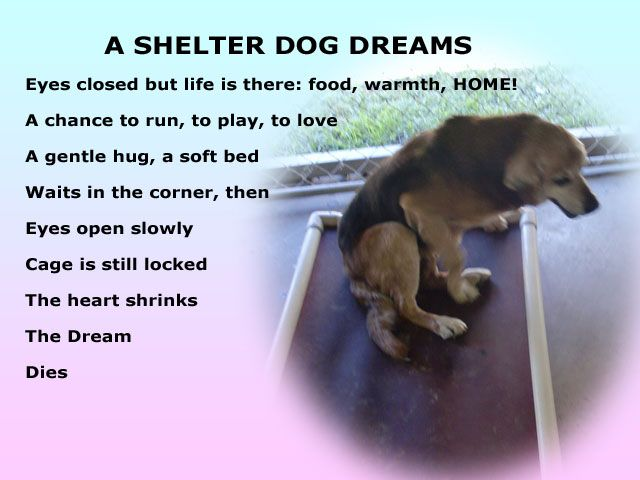 What We Owe To Dogs A Shelter Dog Dreams A Poem This One Makes Me Cry Shelter Dogs Dog Poems Dog List