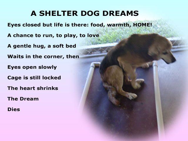 Sad stuff... on Pinterest | Rainbow Bridge, Dog Poems and ...