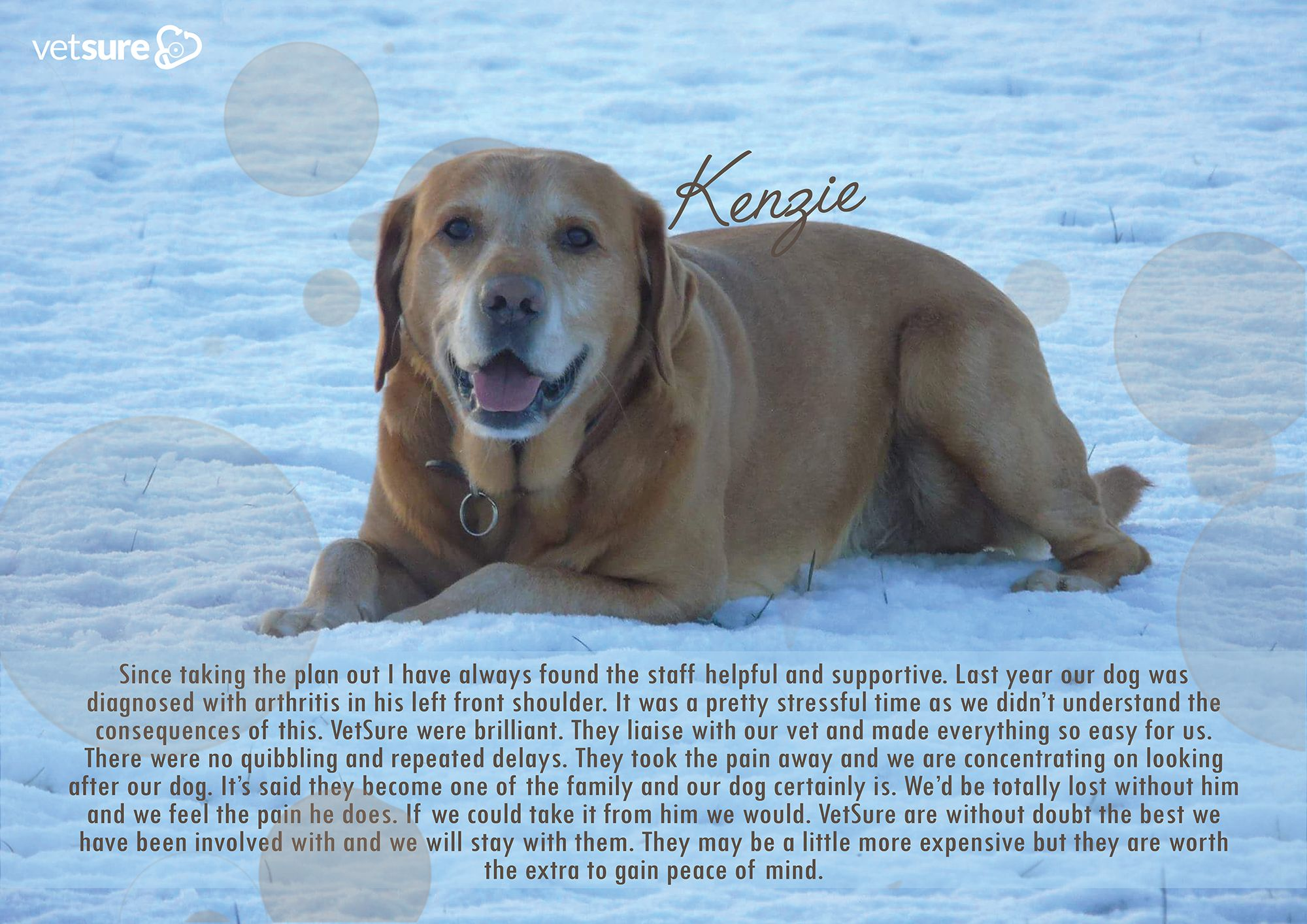 Kenzie #Dog #Review | Cat insurance, Dog insurance, Dogs