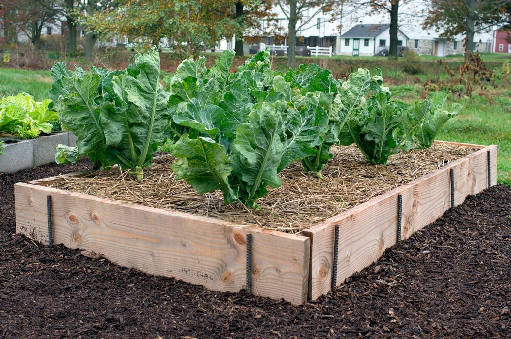 How to build raised beds from planks and rebar | Garden | Pinterest ...