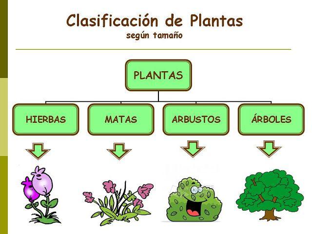Proyecto B Sai Diferencia Entre Arbol Arbusto Y Hierba Clasificación De Las Plantas Fotosintesis De Las Plantas Cuidado De Plantas