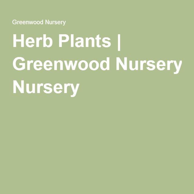 Herb Plants Greenwood Nursery