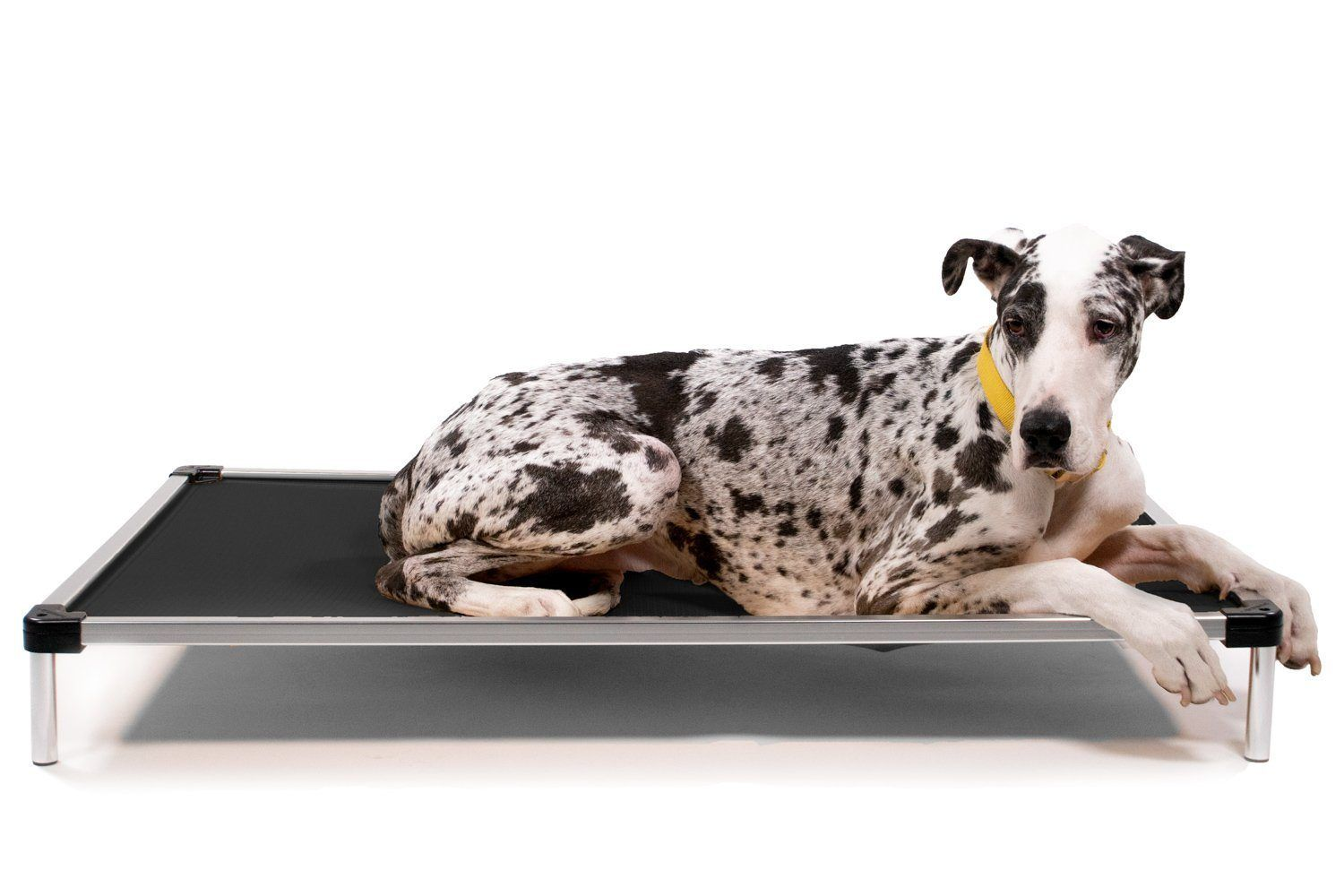Chew Proof Armored Elevated Dog Bed™ in 2020 Elevated