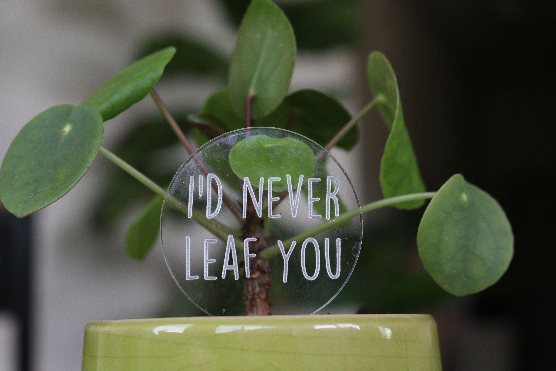 Funny plant pun marker garden stakes decorative aloe you