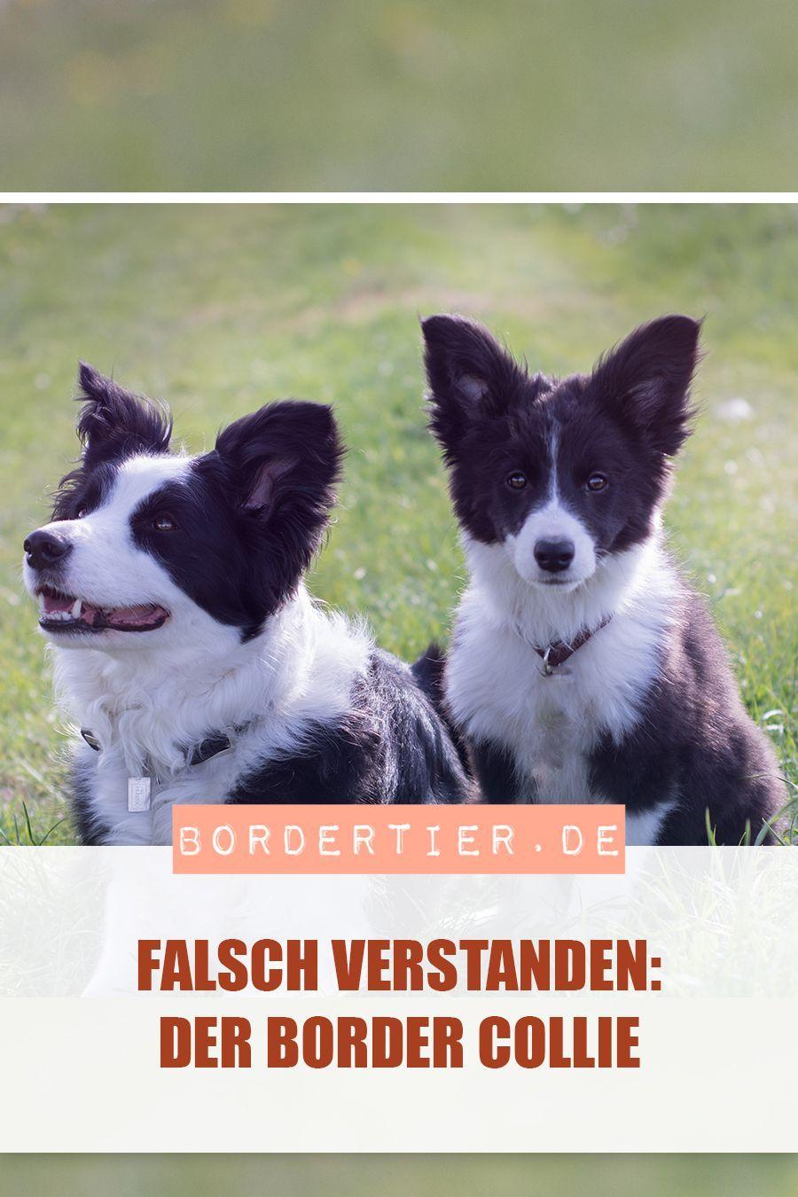 Pin von Nicole Dambacher auf Hunde in 2020 Hunderassen