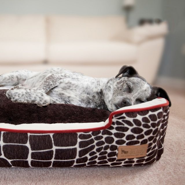P L A Y Pet Lifestyle And You Spoil Your Pet Cute Dog Beds Dog Lounge Bed Dog Bed
