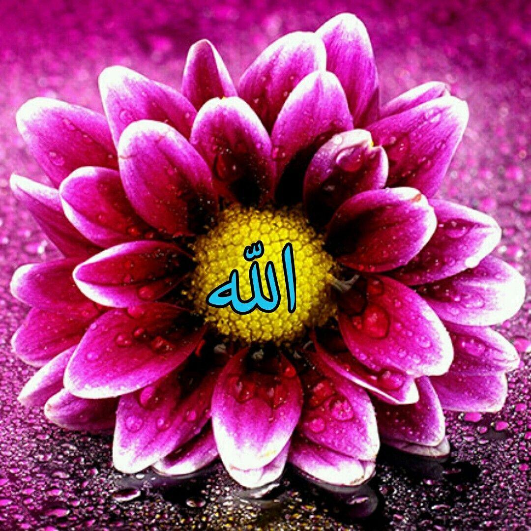 24 خدا Ideas Pink Flowers Wallpaper Makeup Artist Portfolio Hd Flower Wallpaper