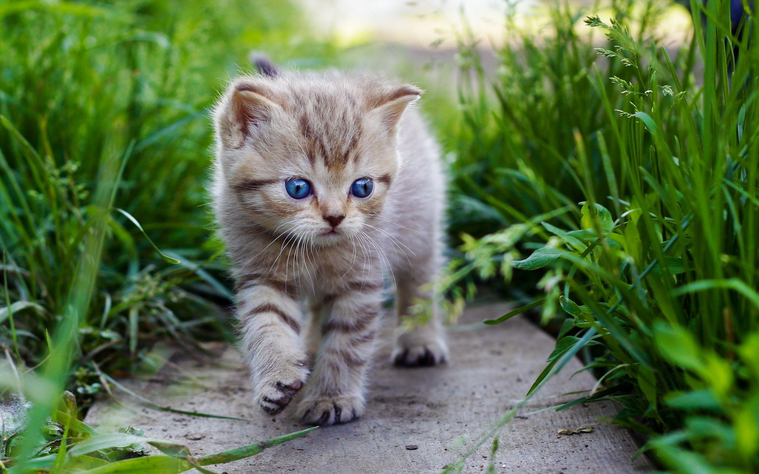 Citations et Proverbes 2: 5 Citations sur les chats - Frawsy