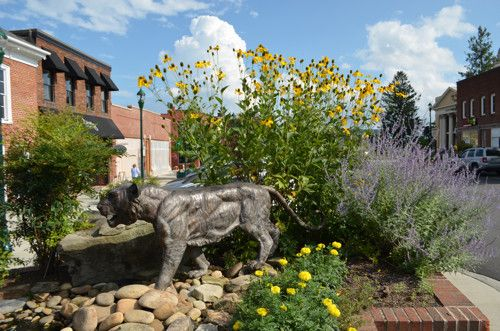 Head To Hendersonville Nc A Cool Mountain Town Hendersonville World Wild Cats