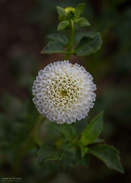 Nice flower!