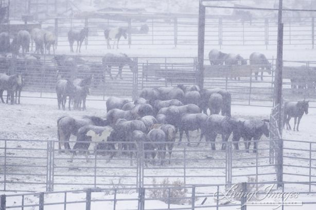 Call To Action What You Can Do To Help The Captured Wild Horses Of Wyoming Wild Horses Horse Rescue Horses