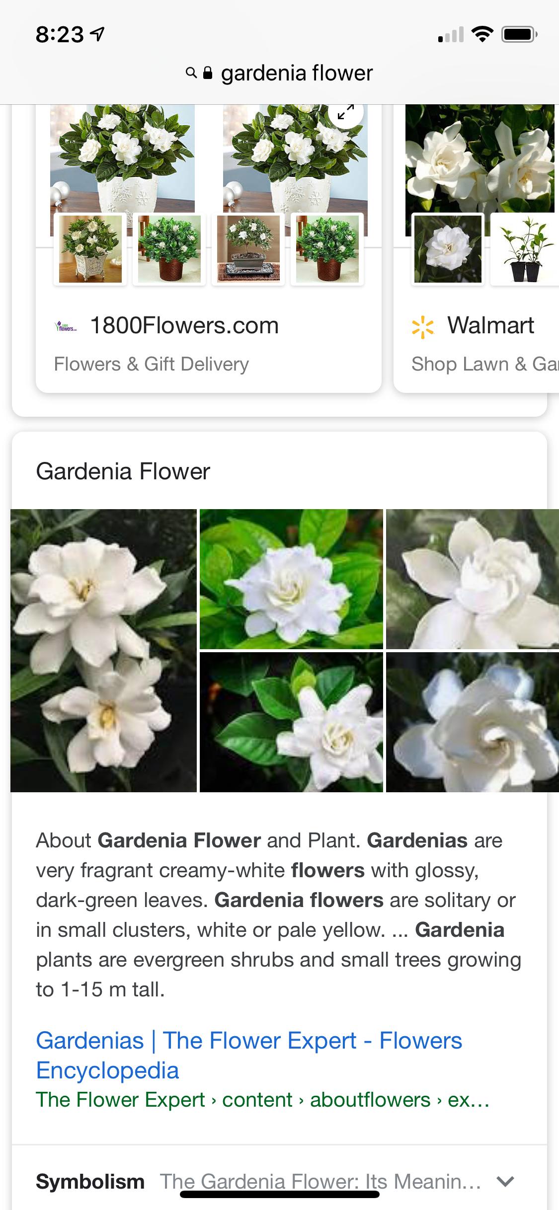 Pin By Jillian Migliorini On Flower Garden Gardenia Plant