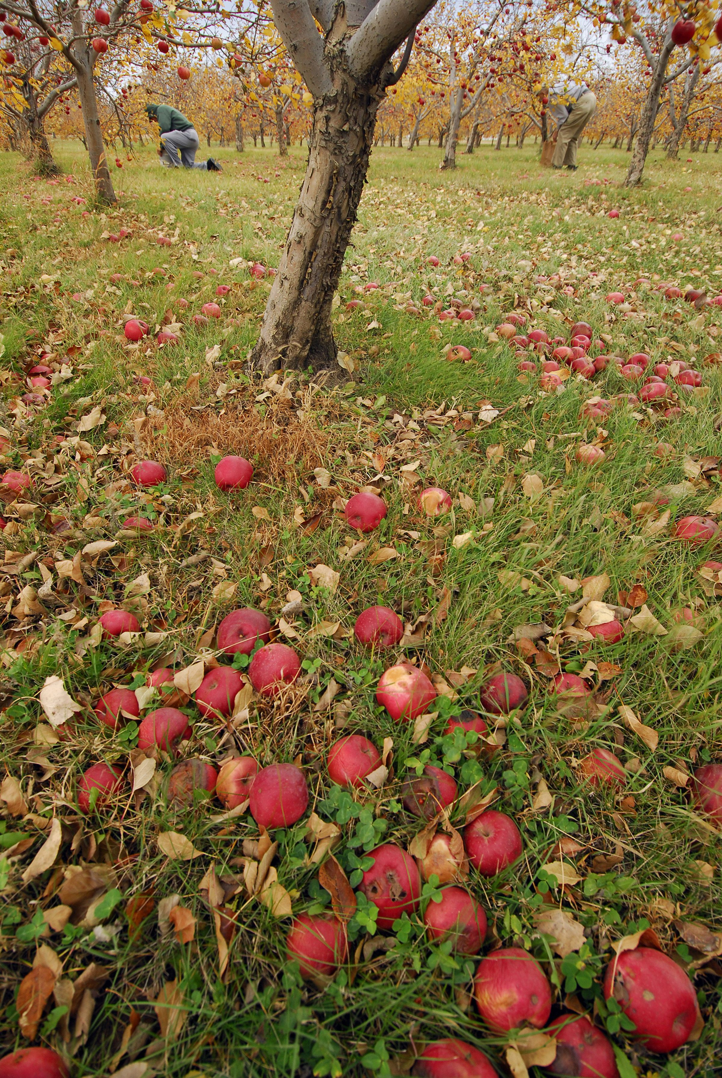 Country Apple Orchard | Visit Sioux Falls | Family First in Sioux ...