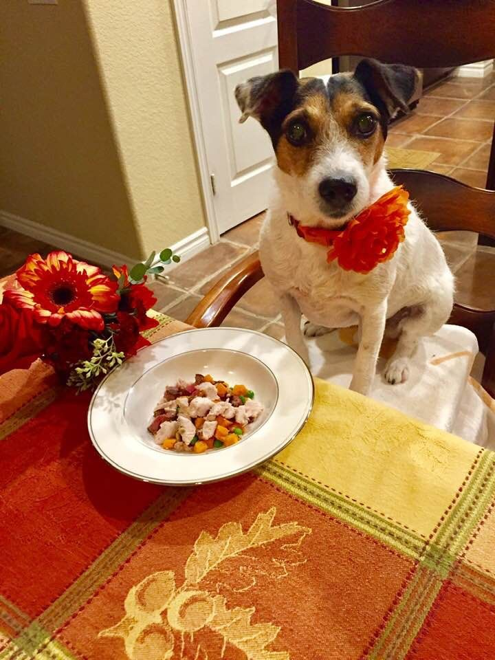 Pin By Mark Nicol On Love Jack Russells Dog Food Recipes