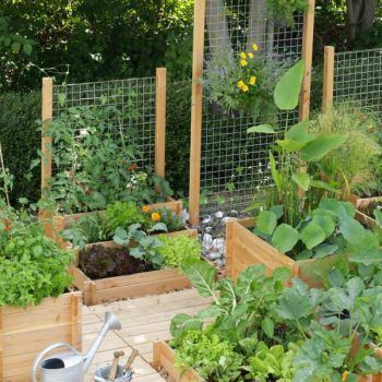 22 Ways for Growing a Successful Vegetable Garden | Tao, Gardens and ...
