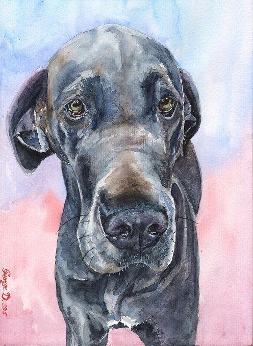 Great Dane Print Great Dane Decor Great Dane Watercolor Blue