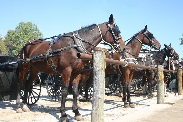 Horses at the hitching post  | Everything Equine | Horses