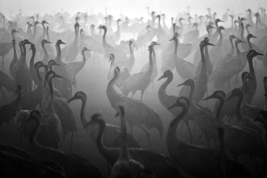 Black white photos. black and white photography   Buscar con Google   Black and White