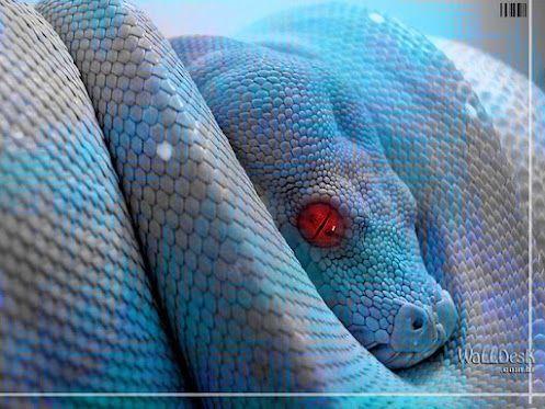 Blue White snake