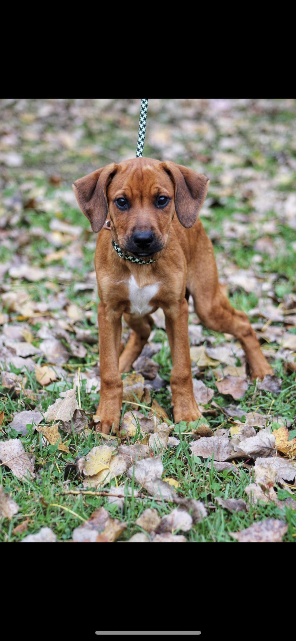 Adopt Honey on Mutt dog, Dog adoption, Mixed breed dogs