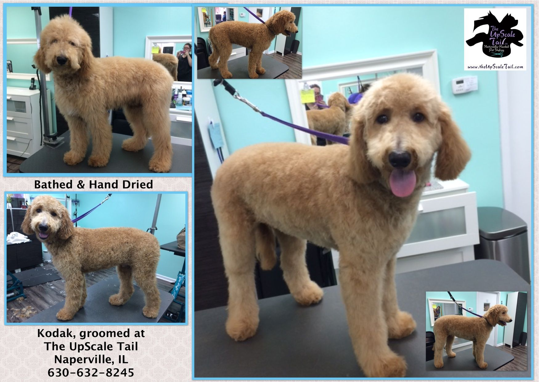 Kodak, groomed at The UpScale Tail, Naperville, IL Pet
