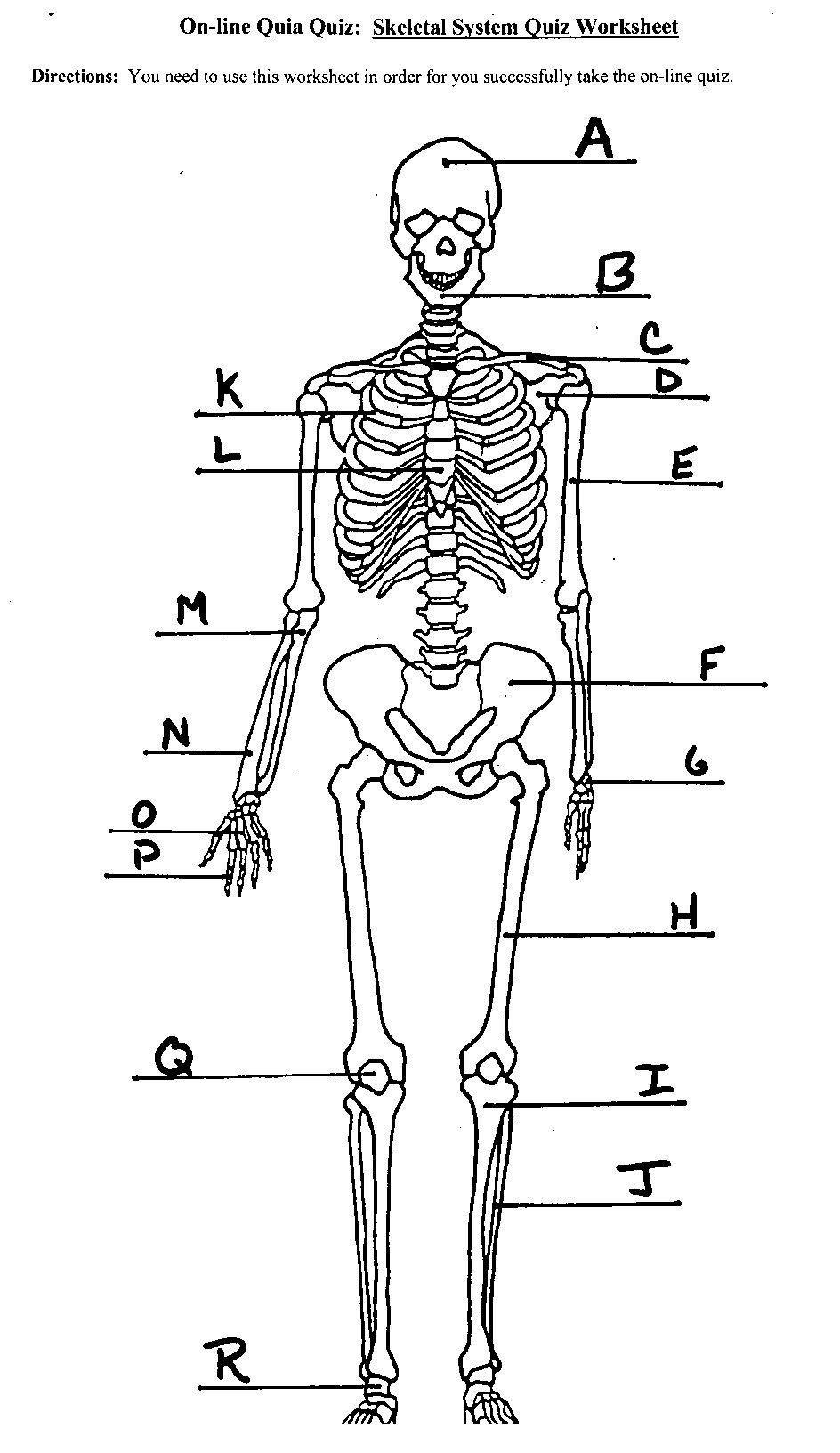Labeling the Skeleton Worksheet Skeletal System in 2020