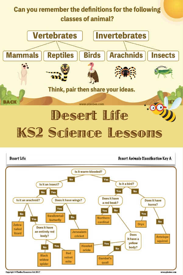 Desert Life Desert animals, Desert life, Science lessons