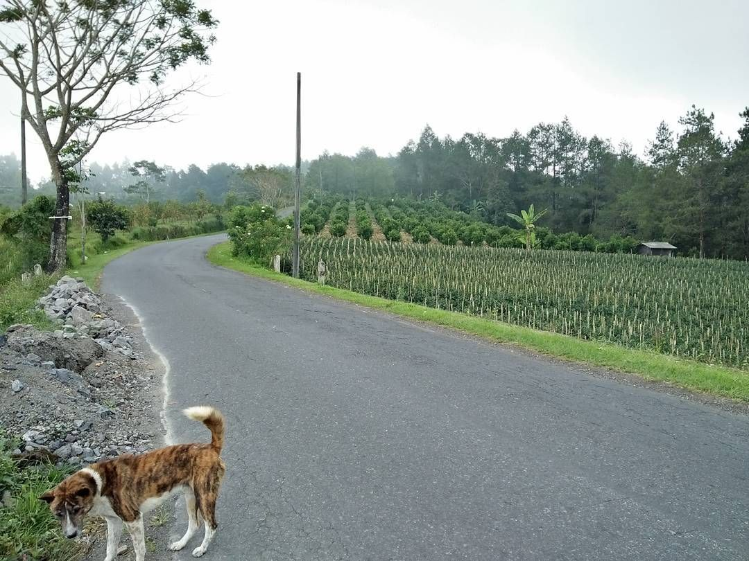 Mai Melaliuyahbali Buleleng Karangasem Klungkung Dari Denpasar Cari Yang Dingin Dulu Lewat Kintamani Sambil Lihat Kebun Jeruk Dan Beli Dong Ah Wisa Kebun