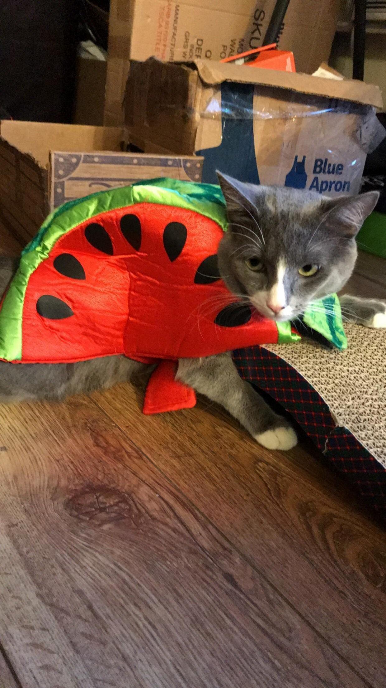 Meet Me Little Watermelon Tom Cute Cats Kittens Cute Cats