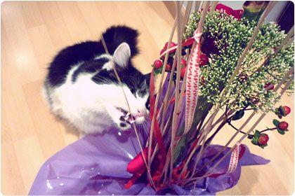 mmmh...I love flowers!