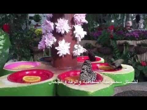 Dubai Butterfly Garden حديقة دبي للفراشات Organic Raised Garden Beds Organic Gardening Botanical Gardens Near Me