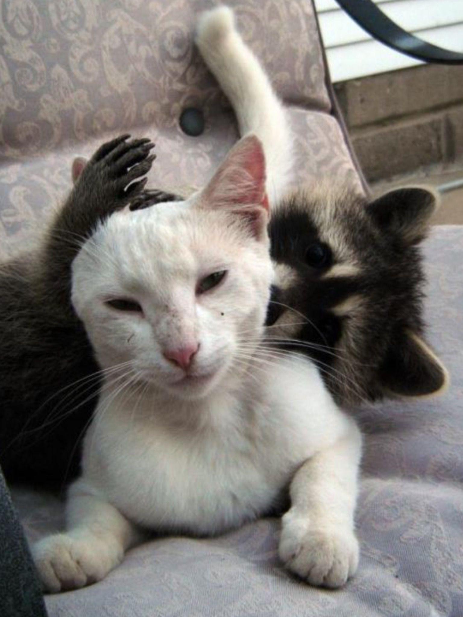 Idea By Cristy Clarke On Me And My Bestie (Animal Friends
