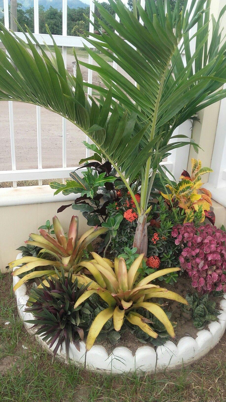 Bromelias y palmera en mi jardin de esquina honduras for Decoraciones de jardines pequenos