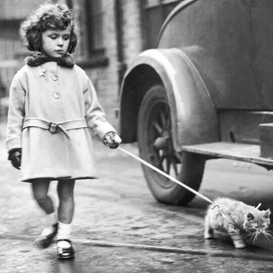 See, cats can walk on leashes.
