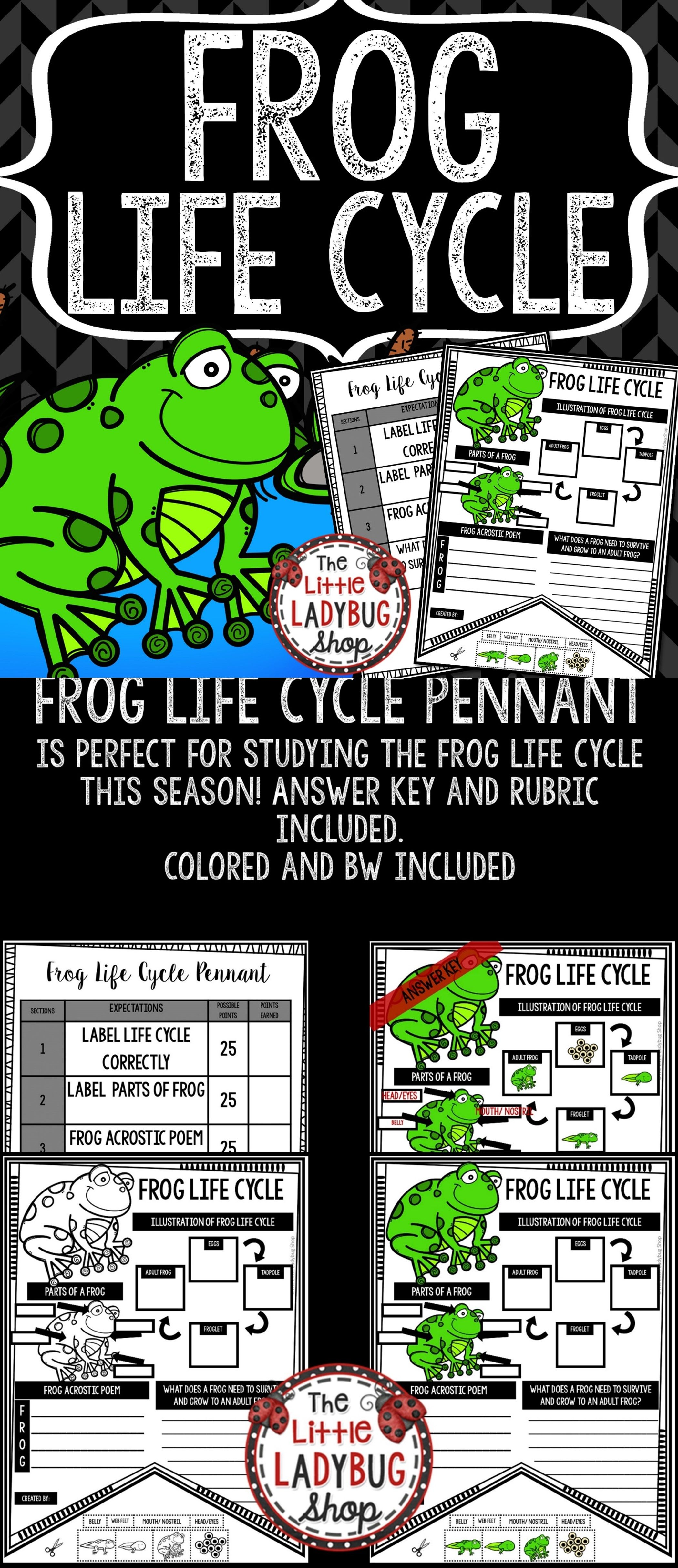 Amphibian Frog Life Cycle Activity Spring Science Lesson