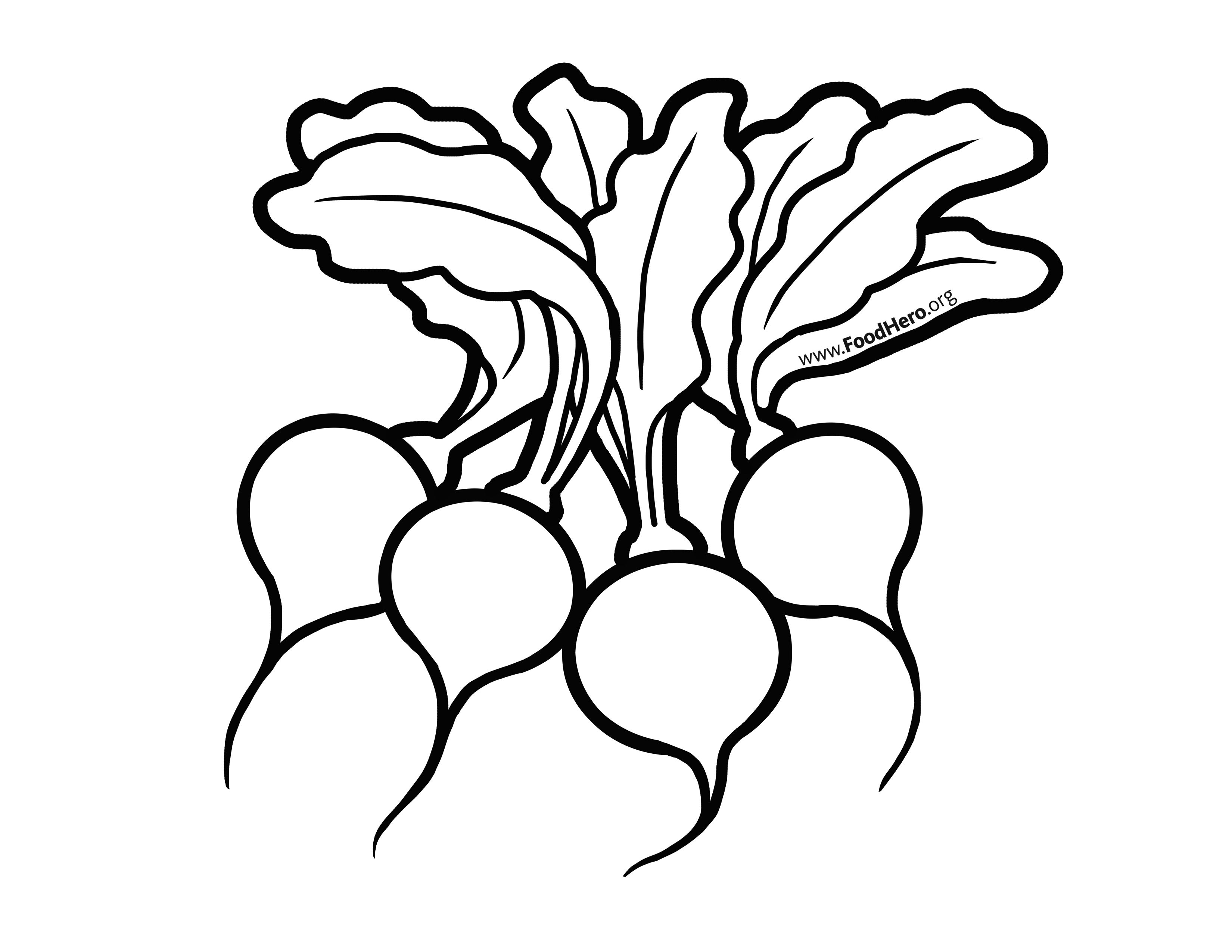 Radishes Illustration Foodhero Bullentinboards Artwork Artwork Illustration Coloring Books [ 2550 x 3300 Pixel ]