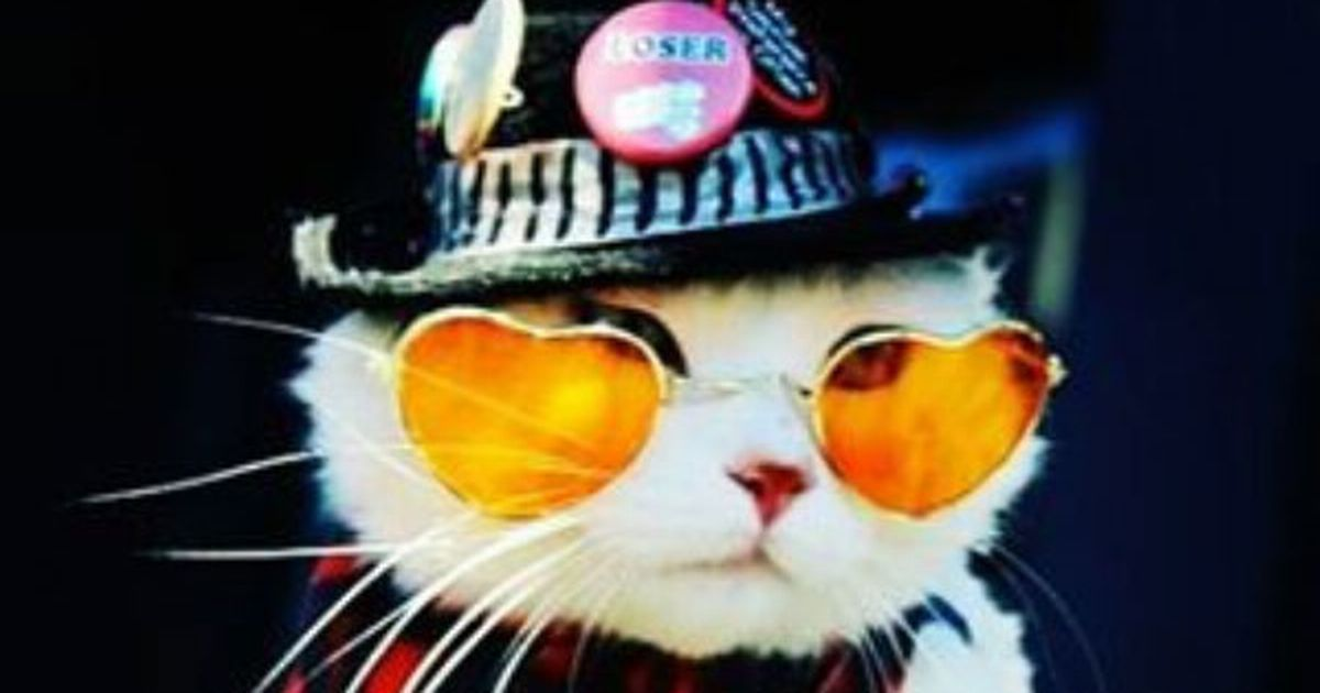 Butters is an online celebrity who is the original 'KoolKat', but a change of attitude means he had to lose his testicles