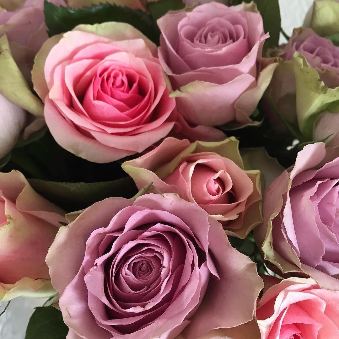 God mandag morgen  Ny dag ny uke nye muligheter   Have a good day!  _______________________________________________________ #roser #roses #mitthjem #myhome #interiør #interior4all #interiorinspiration #inspohome #interior4you #classyinteriors #homedesign #roomforinspo #shabbyyhomes #interior123 #ninterior #inspire_me_home_decor #interiorforinspo #homeamour #interior444 #roominterior #homeinterior #interior2you #passion4interior #homesweethome #intriør123 #roomforinspo #details…