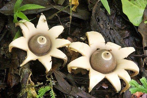 #Mushroom