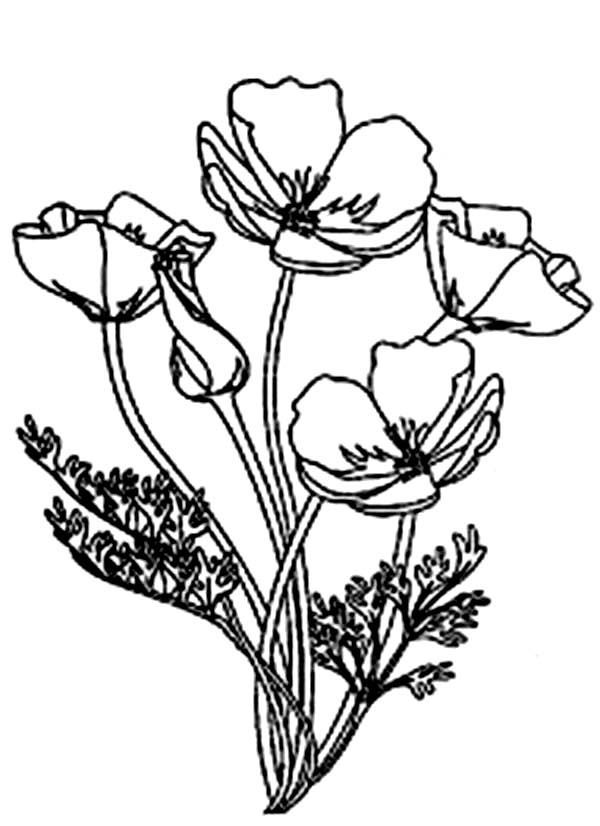 Poppy Flower Line Drawing Clipart Best Poppy Coloring Page